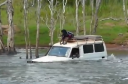 اجتازوا بسيارتهم نهرا يعج بالتماسيح !