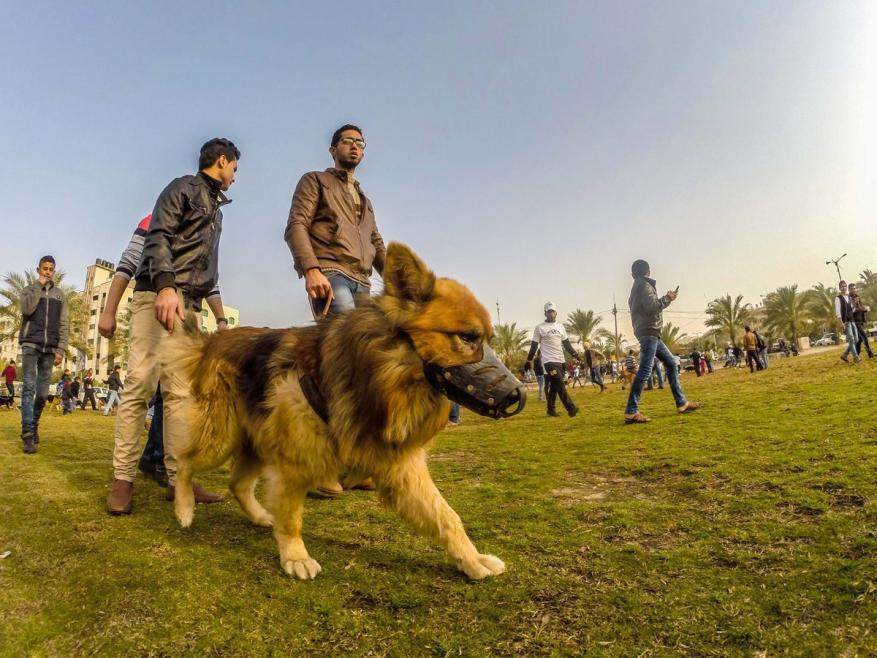 """الشرطة بغزة: منع اصطحاب """"الكلاب"""" في الأماكن العامة وعلى شاطئ البحر"""