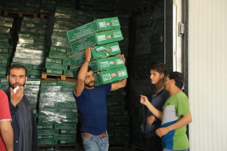 الأوقاف: بدء عملية توزيع لحوم الهدي والأضاحي السعودية