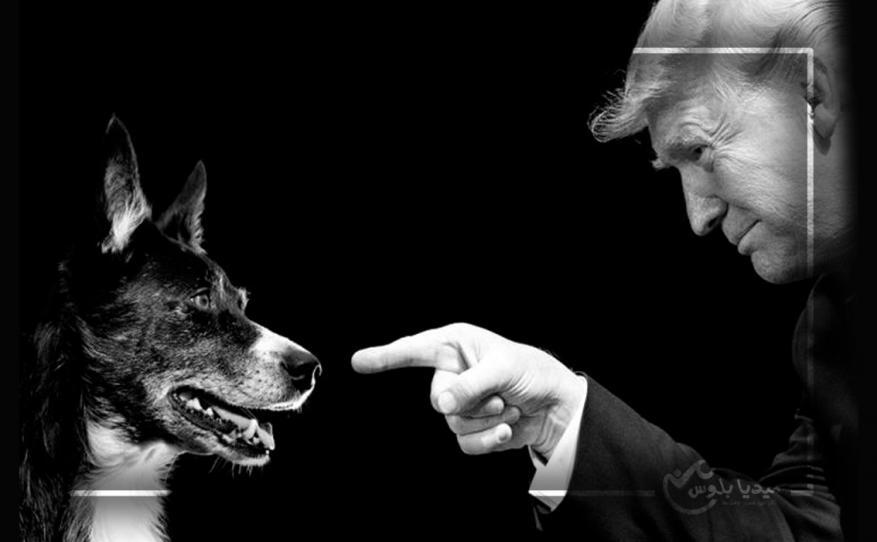 """""""ترمب والكلب"""".. تصريحات جديدة مثيرة للرئيس الأمريكي حول الكلب الذي شارك بعملية """"البغدادي"""""""