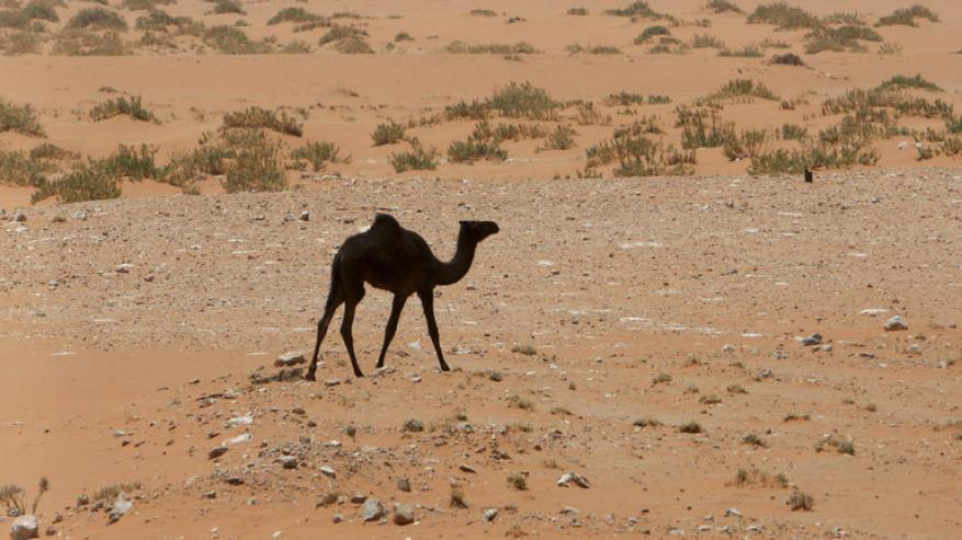 ناقوس الخطر: السعودية مهددة بالعطش