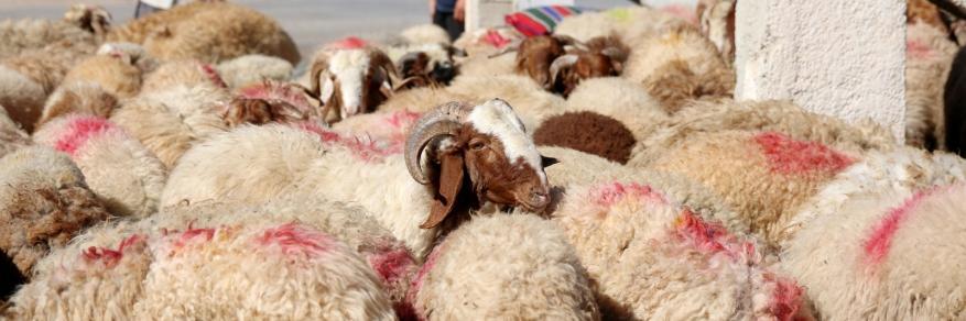لمَ أصبحت المظاهر هي التي تحكم العيد!