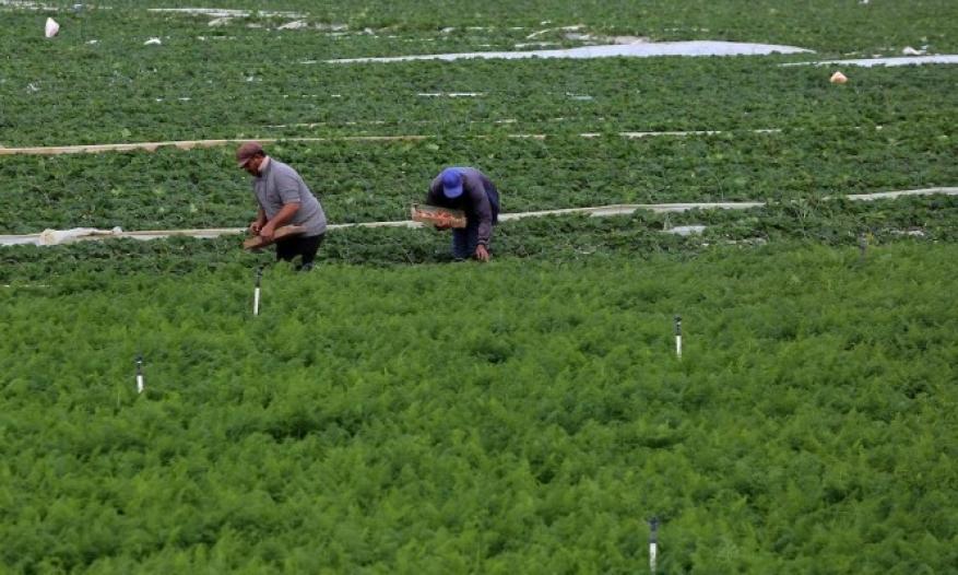 الزراعة تتشر تعليمات للمزارعين لتفادي موجة الحر