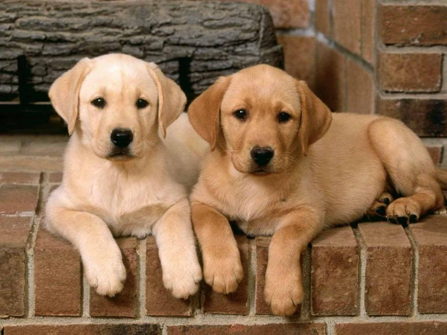 رسميا.. الصين تصنف الكلاب كحيوانات أليفة