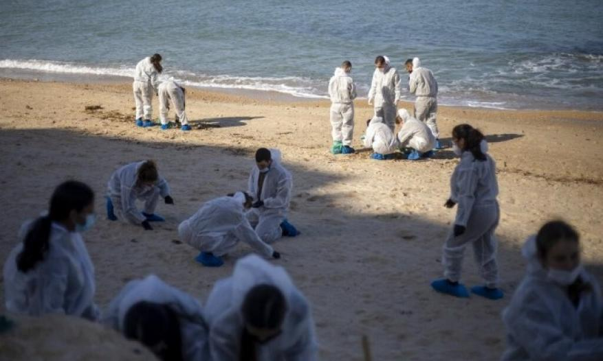 الاحتلال يحدد السفينة المسؤولة عن الكارثة البيئية على سواحل فلسطين المحتلة