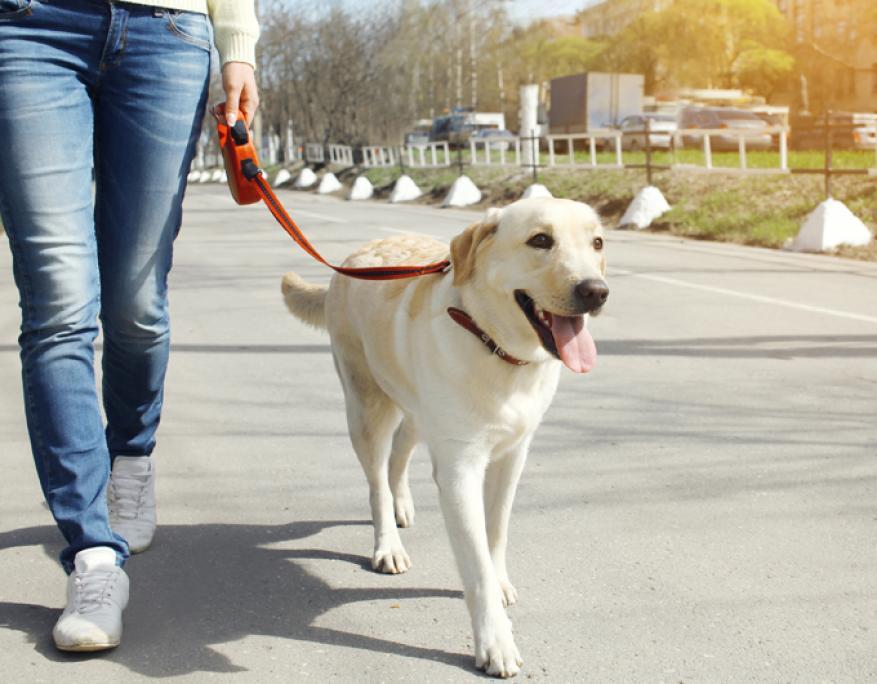 """""""حظر تجول"""" على الكلاب نهارا في مدينة صينية"""