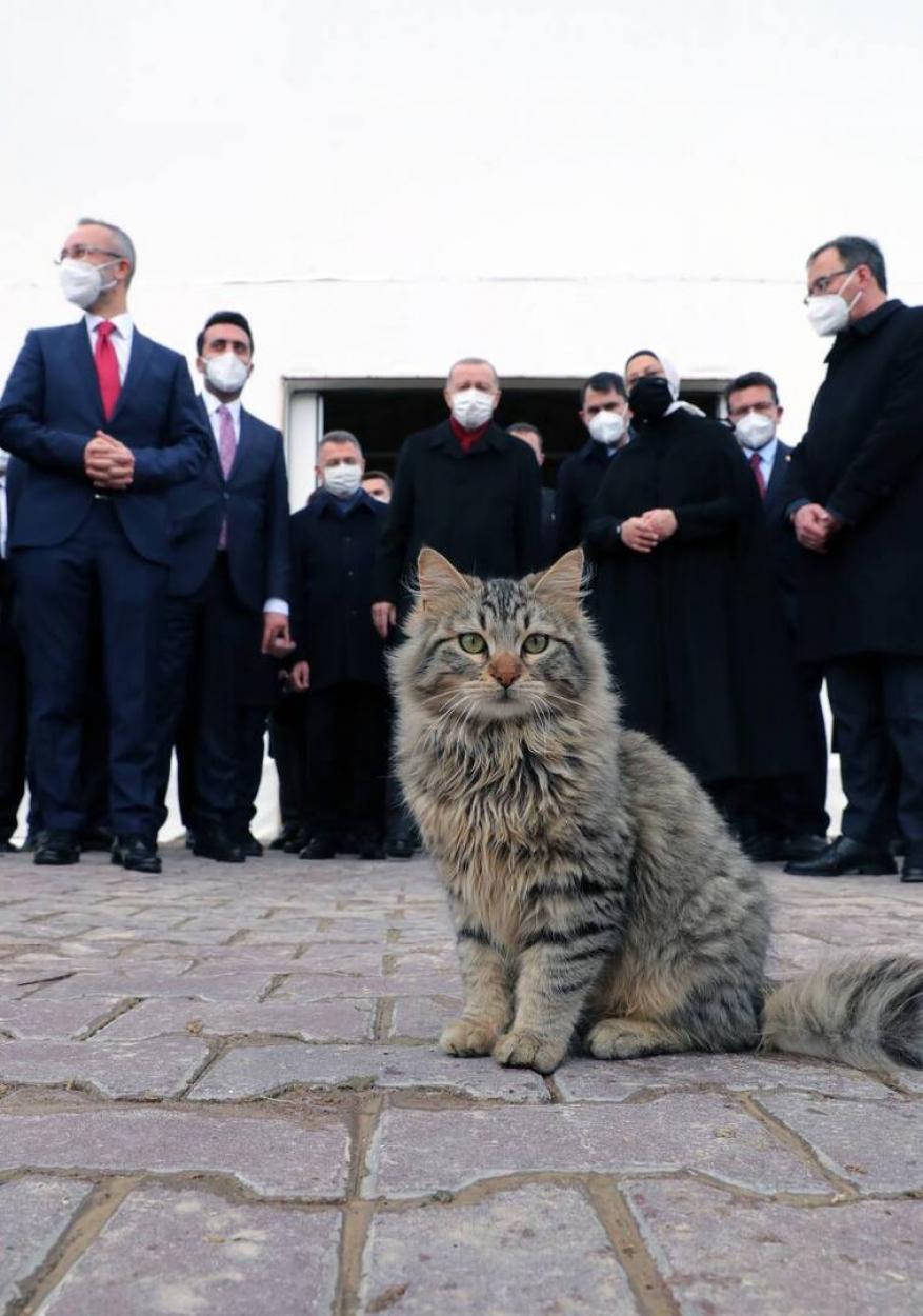 """أردوغان يفتح حسابا في """"تيليغرام"""" وينشر أول صورة فيه"""