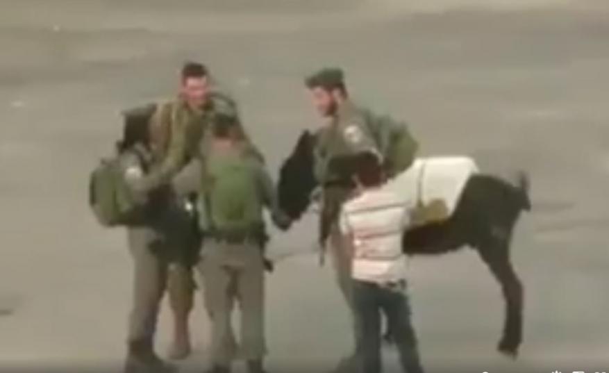 قوات الاحتلال تعتقل حماراً في الخليل