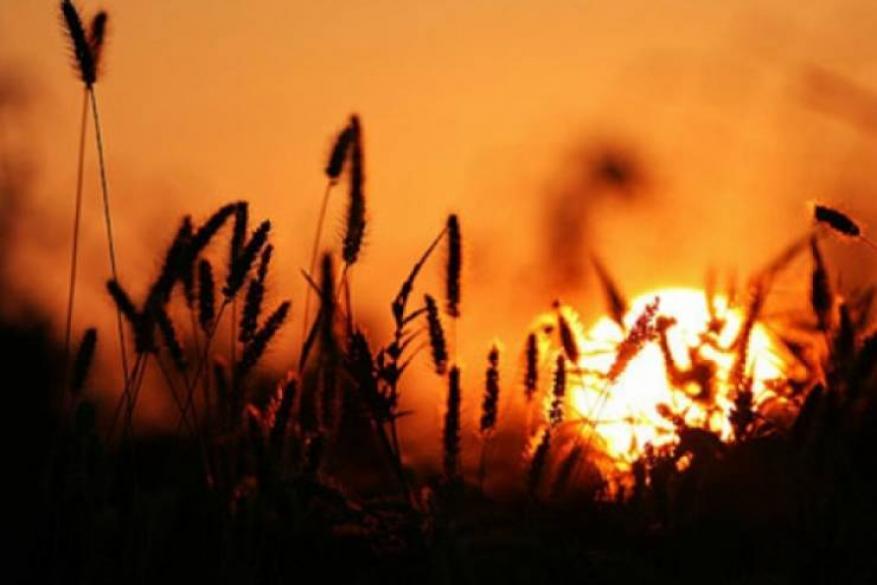 الأرصاد: تواصل الأجواء الحارة اليوم وغدا.. وانخفاضها الاثنين