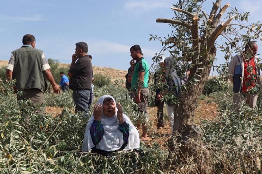 مستوطنون يحطمون عشرات أشجار الزيتون في نابلس