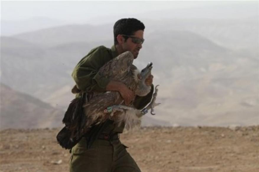 """""""إسرائيل"""" تستعيد """"النسر الجاسوس"""" من المعارضة السورية"""